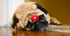 LOL! This Sad Dog Diary Is Just Too Perfect. The Entry At 0:45 Cracked Me Up! | The Animal Rescue Site Blog