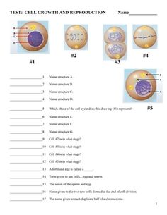 cell organelles matching worksheet smooth student and the words. Black Bedroom Furniture Sets. Home Design Ideas