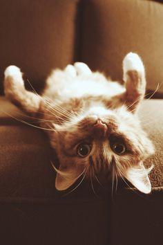 Upside Down Cat by Tim Williams, via 500px