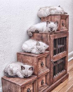 Shelved kitties