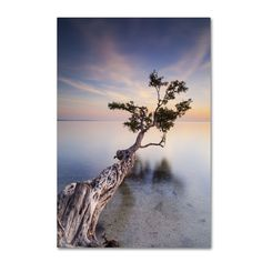 'Water Tree X' by Moises Levy Photographic Print on Wrapped Canvas