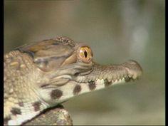 Een krokodil is een reptiel. Reptielen leggen eieren. Grinch Coloring Pages, Ariel Coloring Pages, Frozen Coloring Pages, Pumpkin Coloring Pages, Detailed Coloring Pages, Spring Coloring Pages, Coloring Pages For Boys, Mandala Coloring Pages, Colorful Pictures