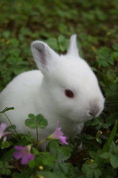 Californian Rabbit Baby in Clover by angel223456.deviantart.com on @deviantART