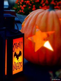 "autumncandi: "" Everything autumn|halloween|fall xx """