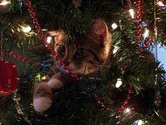 Kat met Kerst