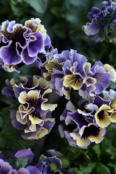 Beautiful Flowers Pictures, Beautiful Flowers Wallpapers, Beautiful Flower Arrangements, All Flowers, Flower Pictures, Green Flowers, Flower Farm, Flower Pots, Garden Statues