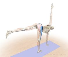 The Daily Bandha: Anatomic Sequencing: Revolved Half Moon Pose
