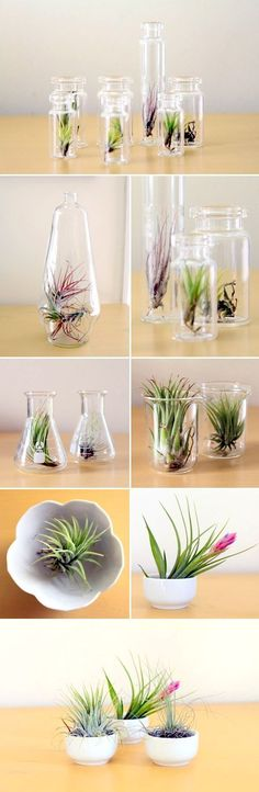 Creative ways to decorate with air plants. A wonderful collection of tutorials curated by Decorating Your Small Space.