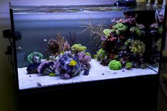 Saltwater Fish Tanks, Saltwater Aquarium, Freshwater Aquarium, Aquarium Fish, Coral Reef Aquarium, Marine Aquarium, Nano Reef Tank, Reef Tanks, Reef Aquascaping