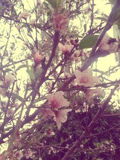 Flores - Vintage  #Flowers #Vintage #Nature