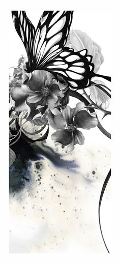 Black and White - Butterfly - Illustration
