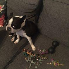Der Hund reit ihm den Kopf ab und zerrt seine Innereien heraus Und Frauchen fotografiert das Ganze begeistert dex1info  Nachrichten News Schlagzeilen