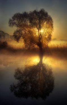 ✯ Morning Mist .. by ~Jeremi12✯  Quiet time in nature..healing to the spirit and mind..works wonders.