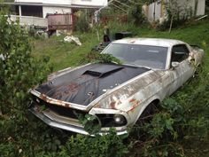 69 Mach 1 in a field getting lost in the overgrowth