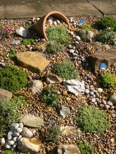 Alpine garden : Grows on You - Alles für den Garten Seaside Garden, Alpine Garden, Garden Cottage, Alpine Plants, Rockery Garden, Gravel Garden, Succulents Garden, Back Gardens, Outdoor Gardens