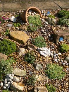Alpine garden : Grows on You                                                                                                                                                                                 More