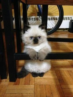 Omg cutest perched kitten