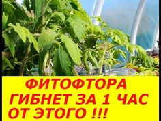 Small Farm, Garden Structures, Diet And Nutrition, Plants, Youtube, Lawn And Garden, Plant, Youtubers, Youtube Movies