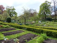 The allotments at the Scottish National Gallery of Modern Art Two with trees in the distance #EdinHour