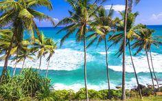 Die Wellen auf Sri Lanka sind nicht von schlechten Eltern © Shutterstock.com