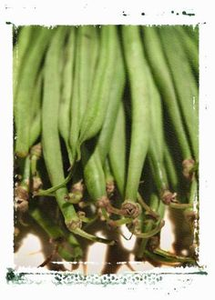 Beans | thegardengeeks - everything you need to know about growing beans