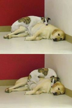 Bunk bed dogs.  Aww.