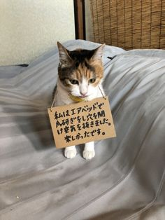 Cute Cats And Dogs, I Love Cats, Cats And Kittens, Japanese Funny, Japanese Cat, Nature Animals, Animals And Pets, Cute Baby Animals, Funny Animals