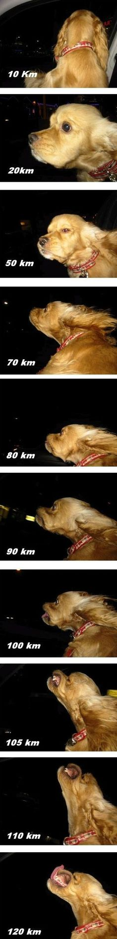 The dog speedometer