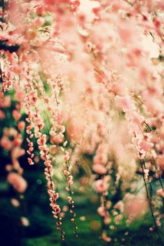 #nature #naturally makes me smile ;)