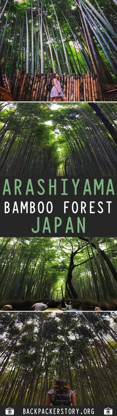 Kyoto's Arashiyama Bamboo Forest is located in western part of Kyoto near the base of the Arashiyama Mountains. How to get to Arashiyama Bamboo Forest Bamboo Forest Japan, Travel Around The World, Around The Worlds, World 1, Kyoto Japan, Backpacker, Forests, Vacation Spots, Cool Places To Visit