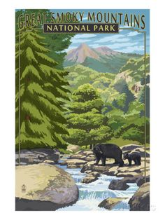 Leconte Creek and Bear Family - Great Smoky Mountains National Park, TN Print by Lantern Press - AllPosters.co.uk
