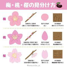 梅・桃・桜の見分け方のイラストが分かりやすいと話題に - Togetterまとめ