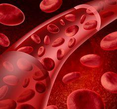 O bom funcionamento das plaquetas auxilia na correta coagulação do sangue…