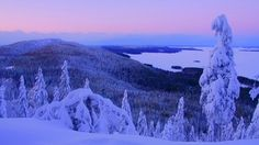 Landscape Pictures, Nature Pictures, Lappland, Scandinavian Countries, Winter Light, Winter Beauty, Winter Scenes, Love Photography, Pretty Pictures