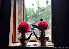Bilder aus Nepal. Pictures from Nepal and India. Rhododendron im Fenster
