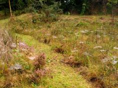 Mown path through arthropod rich wildflower meadow