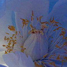 'duftig blau' von Rudolf Büttner bei artflakes.com als Poster oder Kunstdruck $18.03