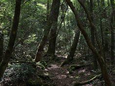 1. Aokigahara Forest  (Yamanashi Prefecture) - The 11 Spookiest Spots in Japan  #Yamanashi #Aokigahara #AllAboutJapan #Japan #Travel