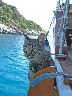Boat cat Bob - such a cute story! Click to original picture and read the article <3