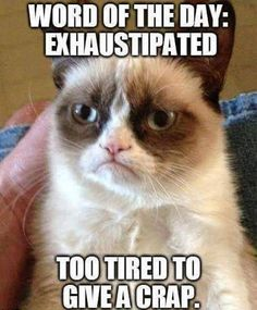 Grumpy cat frowns on your shenanigans. Grumpy cat is not impressed. I wonder if grumpy cat is an engineer. I did find some Grumpy Cat gifs: Grumpy Cat say \ Grumpy Cat Quotes, Funny Grumpy Cat Memes, Funny Animal Memes, Funny Animal Pictures, Funny Pics, Funny Jokes, Funny Animals, Grumpy Kitty, Funniest Animals