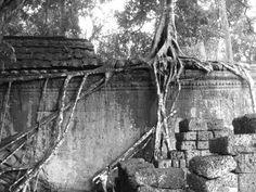 Temple Tree Angkor. Photo: JW Brown