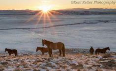 Great Basin Desert, Utah. Photo by Kent Keller