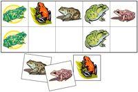 frog matching file folder game