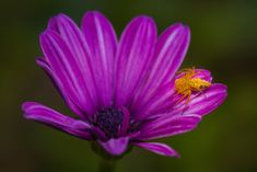 Stand Out by Carole Pallier