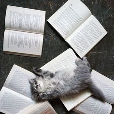 books and kitten