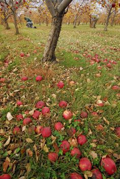Country Apple Orchard | Visit Sioux Falls