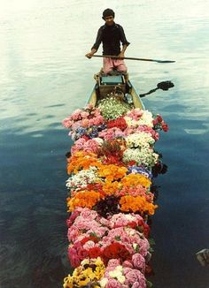 Flowers on the River in India | Flowers and Foliage