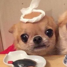 Cute Baby Animals, Funny Animals, Dog Match, Dog Icon, Anime Best Friends, Matching Profile Pictures, Funny Animal Pictures, Cute Icons, Matching Icons