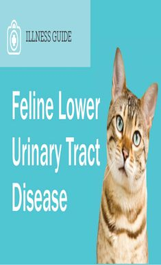 Feline Lower Urinary Tract Disease on Cat Guides Coconut Oil Cats, Health Facts, Health Tips, Cat Health Care, Sick Cat, Cystitis, Cat Signs, Medical Conditions, Health Problems