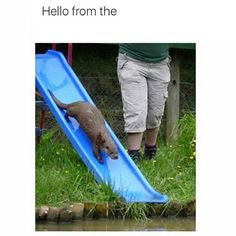 """""""HELLO FROM THE OTTER SLIDE"""" -Adele by Instagram - picgist.com"""